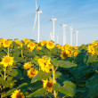 Wind turbines and sunflowers — Stock Photo #30171503