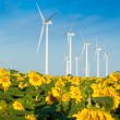 Wind turbines and sunflowers — Stock Photo #30171565