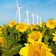 Wind turbines and sunflowers — Stock Photo #30171599