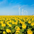 Wind turbines and sunflowers — Stock fotografie
