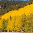 Stock Photo: Bicycling in Fall Aspen Trees