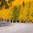 Autumn on road — Stock Photo #30920513