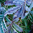 First Frost — Stock Photo
