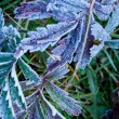 First Frost — Stock Photo #30935373