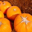 Pumpkins — Stock Photo #30938159