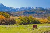 Autumn on the Ranch — Stock Photo