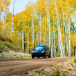 Aspen Trunks in Fall — Stock Photo