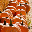 Pumpkins — Stock Photo #30942315