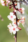 Primavera — Foto Stock