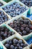 Frischwaren blaubeeren — Stockfoto