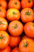 Fresh produce tomatoes — Foto Stock