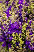 Fresh cut flowers — Stock Photo