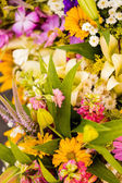 Fresh cut flowers — Stock Photo