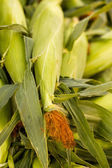 Fresh produce corn — Stock Photo