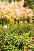 Plantas em viveiro — Fotografia Stock