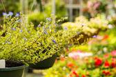 Plants at Nursery — Stock Photo