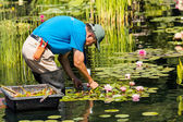 Gardener working with lilies. — 图库照片
