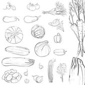 Fresh Vegetables Sketch Collection — Stock Vector