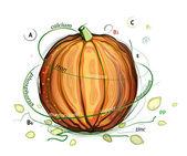 Pumpkin and Seeds Vitamins Illustration — Stock Vector