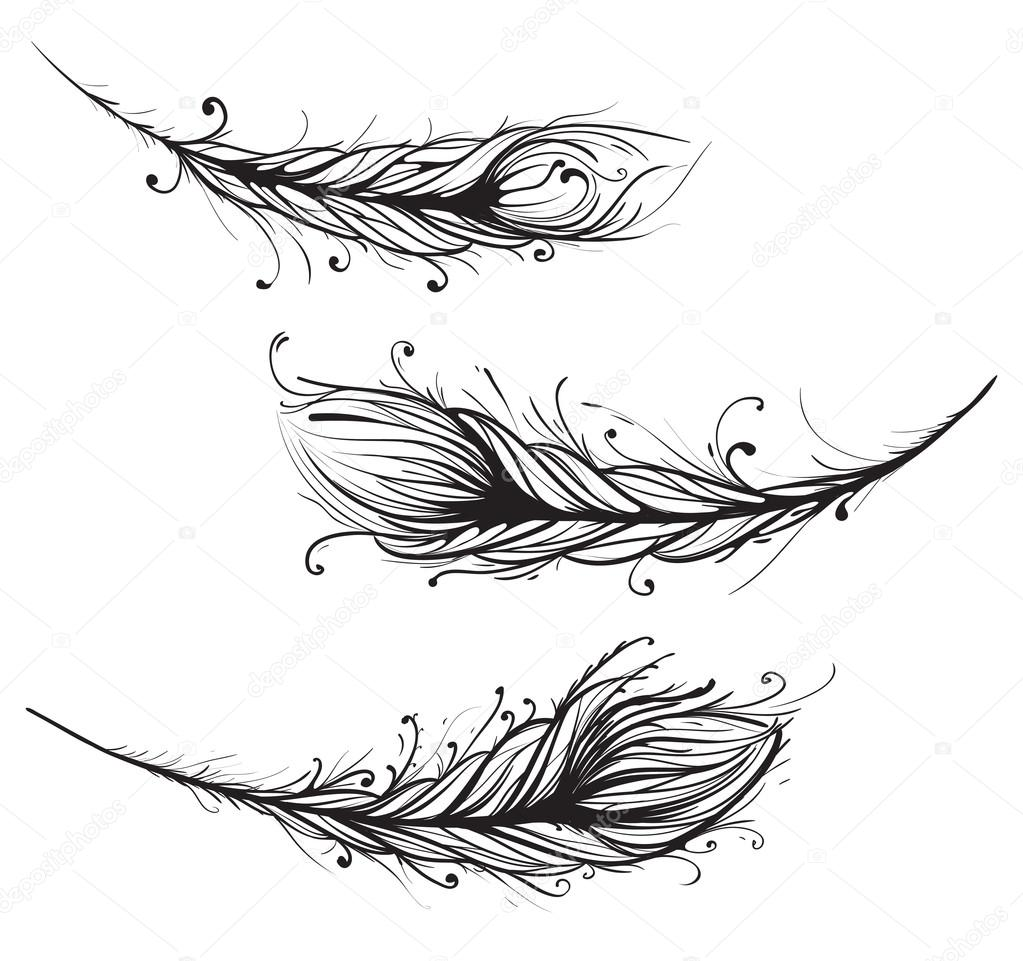 Ornate Feathers Illustration EPS8. — Stock Vector #20072495