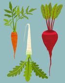 Growing Root Vegetables Set with Green Leafy Top — Stock Vector