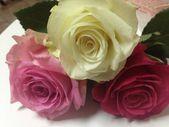 Lovely flowers — Stock Photo