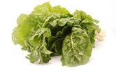 Fresh spinach on white — Stock Photo