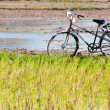 Stock Photo: Lonely bike waiting, field in early morning, Mekong delta, Vietnam