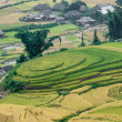 Terraced fields, minority village. Tu Le Valley, Mu Cang Chai District, Yen Bai Province, Vietnam — Stock Photo