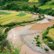 Small stream flowing through terraced fields, Mu Cang Chai distr — Stock Photo