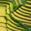 Terraced fields, Mu Cang Chai District, Yen Bai Province, Vietnam — Stock Photo #29098225