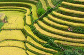 Terraced fields, Mu Cang Chai District, Yen Bai Province, Vietnam — Stock Photo