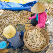 Woman and child is threshing corn by hand, Mekong Delta, Vietnam — Stock Photo