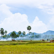 Tend oxen on harvested field, fumes of straw, cloud sky, Mekong Delta, Vietnam — Stock Photo