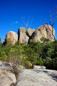 Tidbinbilla Nature Reserve, Australia — Stock Photo