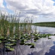 Everglades National Park — Stock Photo