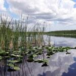 Everglades National Park — Stock Photo #17626681