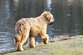 Funny dogs frolicking in the park — Photo