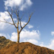 Stock Photo: Solitary tree
