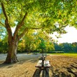 Park in fall time — Stock Photo #13367998