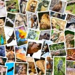 Different animals collage — Stock Photo #13767625