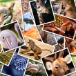 Stock Photo: Different animals collage