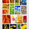 Floral collage - Stock Photo