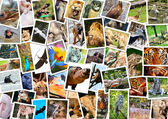 Different animals collage — Foto Stock