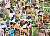 Different animals collage — Stock Photo