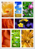 Floral collage — Stock Photo