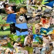 Different animals collage on postcards — Stock Photo