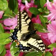 Butterfly on flower — Stock Photo #14152802
