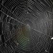 Spiderweb — Stock Photo #14152928