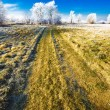 Wintery landscape — Stock Photo